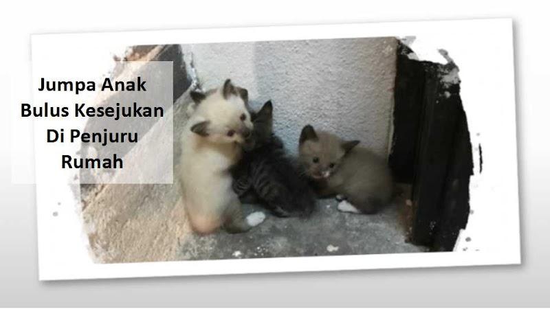 Jumpa Anak Kucing Kesejukan Di Penjuru Rumah