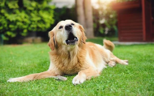 Ο σκύλος σου γίνεται υπερπροστατευτικός με τα παιχνίδια του;