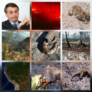 Bolsnaro le echa la culpa a la ONG de los incendios en el amazonas.