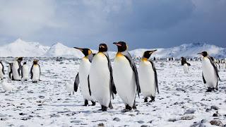 Unos andares cómicos, adaptación al duro clima antártico