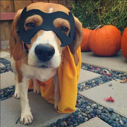 Mommy blog expert 10012015 11012015 for more dog friendly halloween ideas including some great diy pet costumes you can make for 15 or less visit treatingforall solutioingenieria Image collections