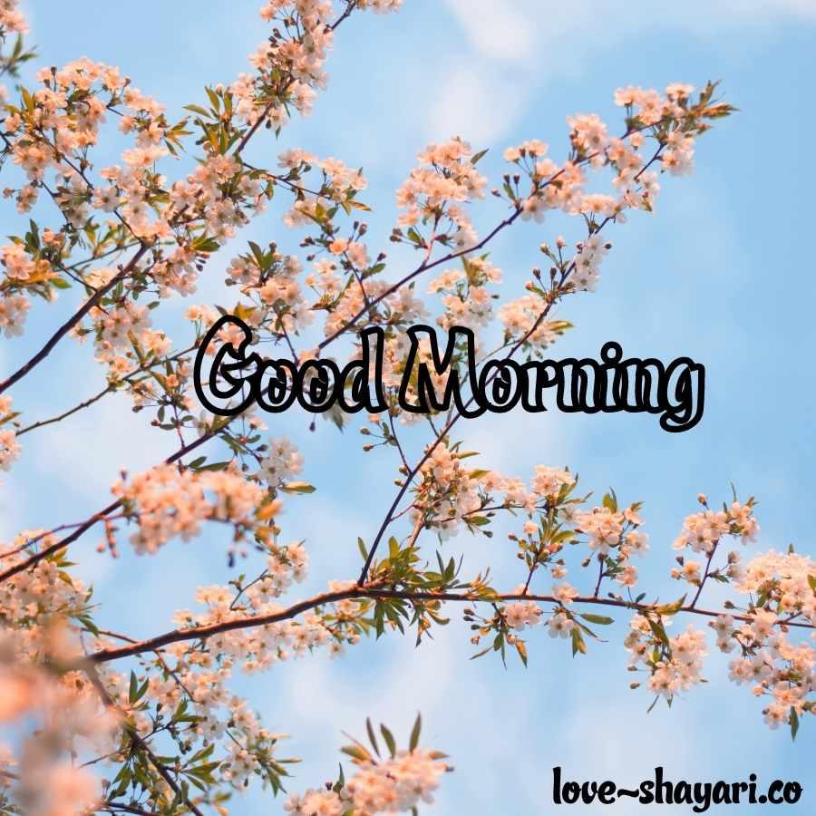 gud morning flower images