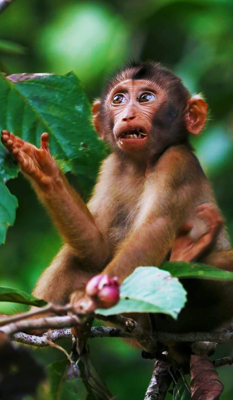 Funny monkey expression.