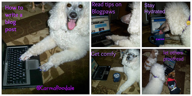 Carma Poodale, standard poodle explains how to write a blog post