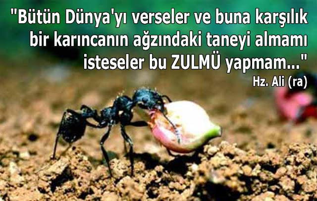 karınca, tarla, işçi karınca, karınca tane, toprak, tohum