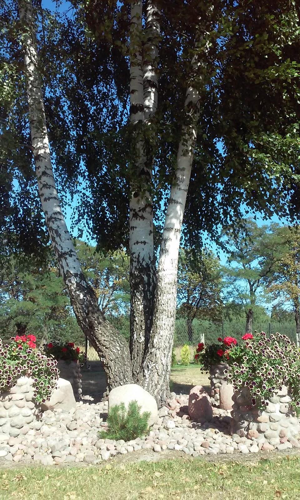 Ogrody Aj Doniczki Z Kamienia Polnego Połączone Z