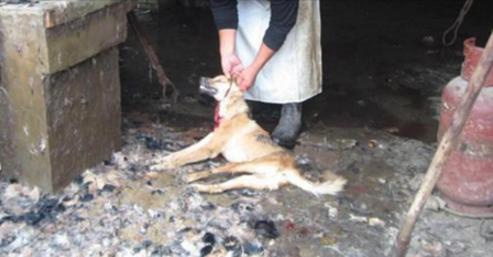 Ces militaires torturent un chien puis l'étranglent avec une barre de fer. Quand les gens l'apprennent, ce qu'il se passe bouleverse le pays.