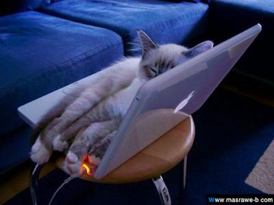صور صور قطط كيوت 2020 خلفيات قطط جميلة جدا cats11.png