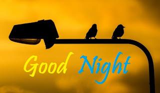 good night pic with bird