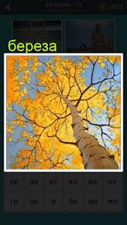 вид на березу осенью снизу вверх игра 667 слов
