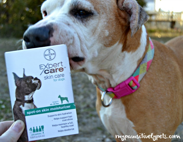 Caring for dog's dry winter skin with a topical moisturizer