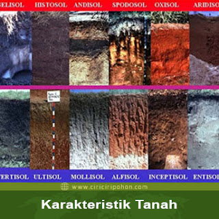 ciri ciri pohon karakteristik tanah