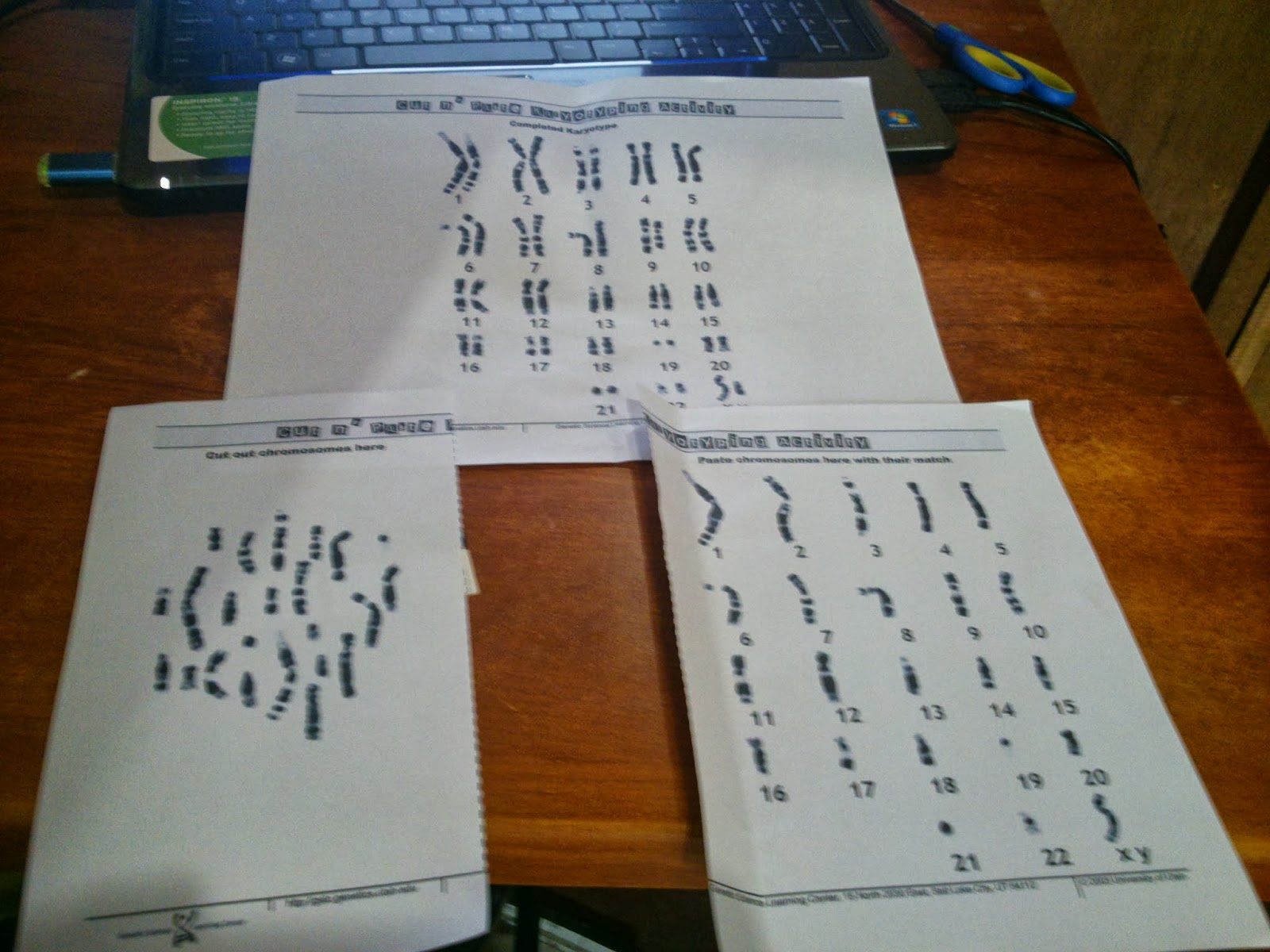 Activities In Ict Karyotyping Activity