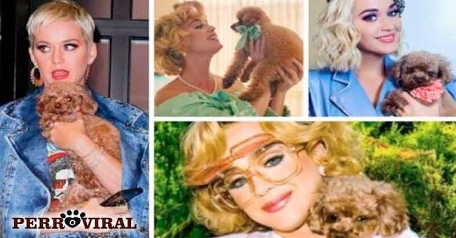Katy Perry intentó convertir a su Perro en Vegano y fue duramente criticada