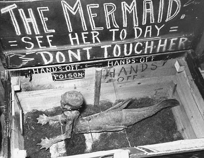 Wunderkabinett The Amazing Feejee Mermaid