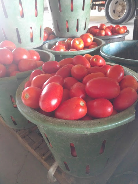 Now taking orders for our ROMA TOMATOES!