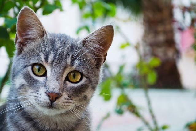 foto kucing imut dan lucu