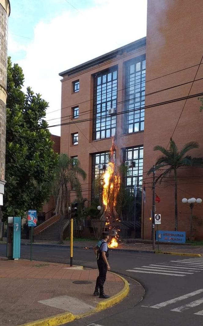 Se incendió una palmera y un poste de luz frente a la Municipalidad de Posadas