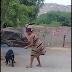 Vídeo de mulher matando cachorro a facadas em Itapetim revolta internautas