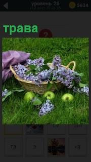 Корзина с сиренью стоит на траве и рядом валяются яблоки и небольшая сиреневая ткань