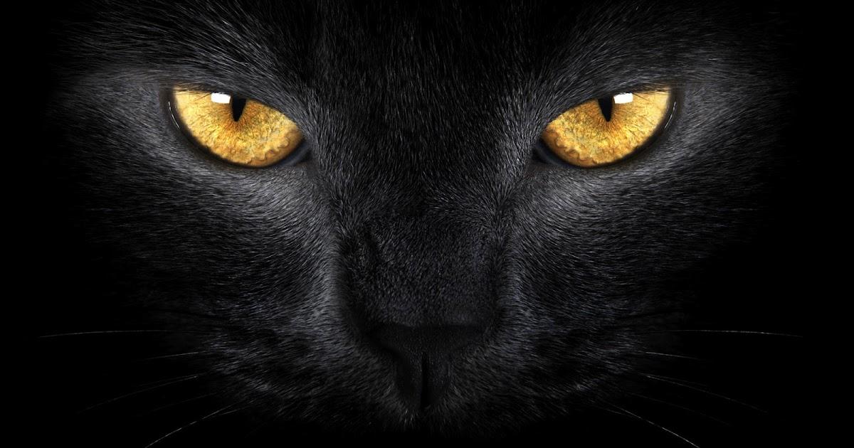 Rostro De Un Gato Negro