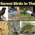 Top 10 Rarest Birds In The World In Hindi