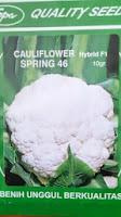 sayur kembang kol, bunga kol, manfaat kembang kol, budidaya kembang kol, jual benih bunga kol, toko pertanian, toko online, lmga agro