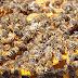 मधुमक्खी पालन या Apiculture