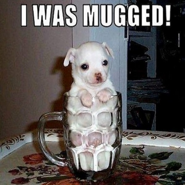 dog funny memes