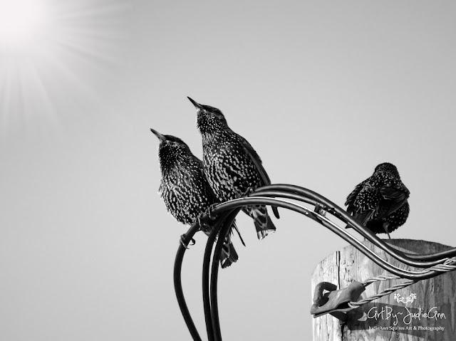 Birds Singing Print
