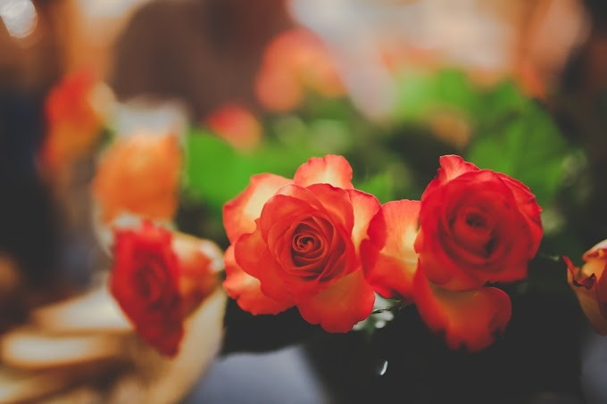 Rose & Fresh Flowers Wallpapers