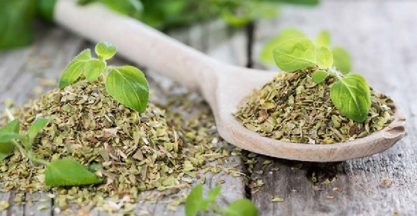 What are the benefits of marjoram water for cycle organization ?