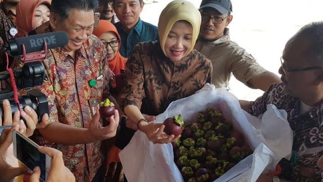 Tahun 2014 Distop, Era Jokowi Lewat WTO Akhirnya RI Berhasil Paksa China Buka Impor Manggis dari Indonesia