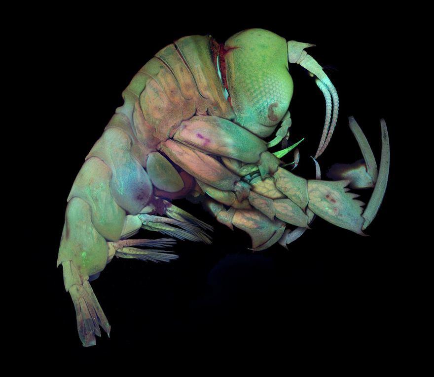 2016 Nikon Macro Photo Contest Winners Show The World Like You've Never Seen Before - Deep Sea Crustacea