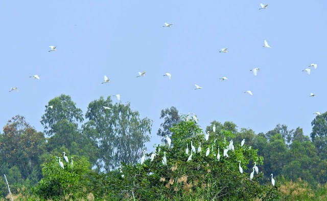 Vườn chim trong thành phố Cà Mau
