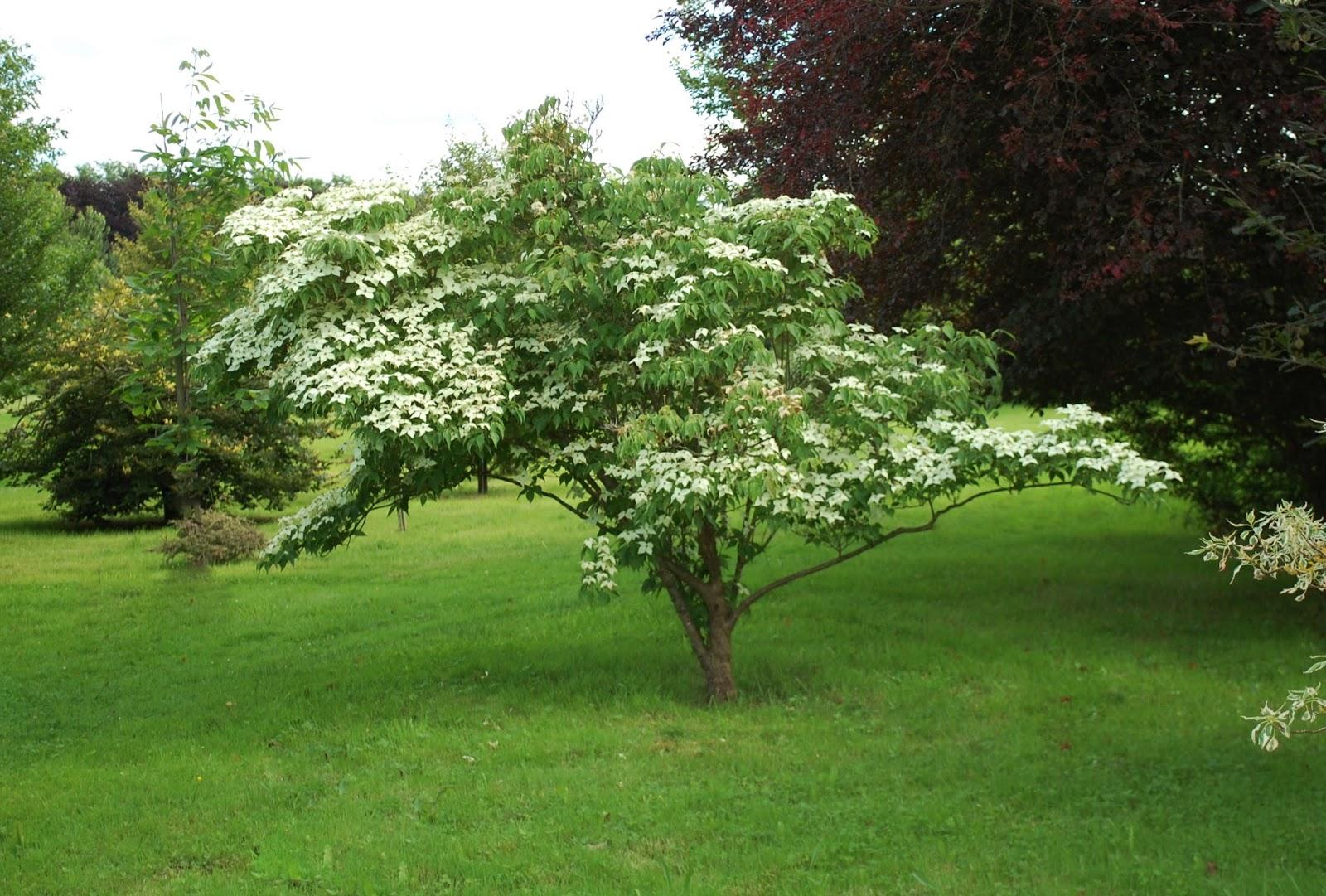 arboretum adeline apres les trombes d 39 eau la chaleur. Black Bedroom Furniture Sets. Home Design Ideas
