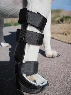 recuperação muscular em cães