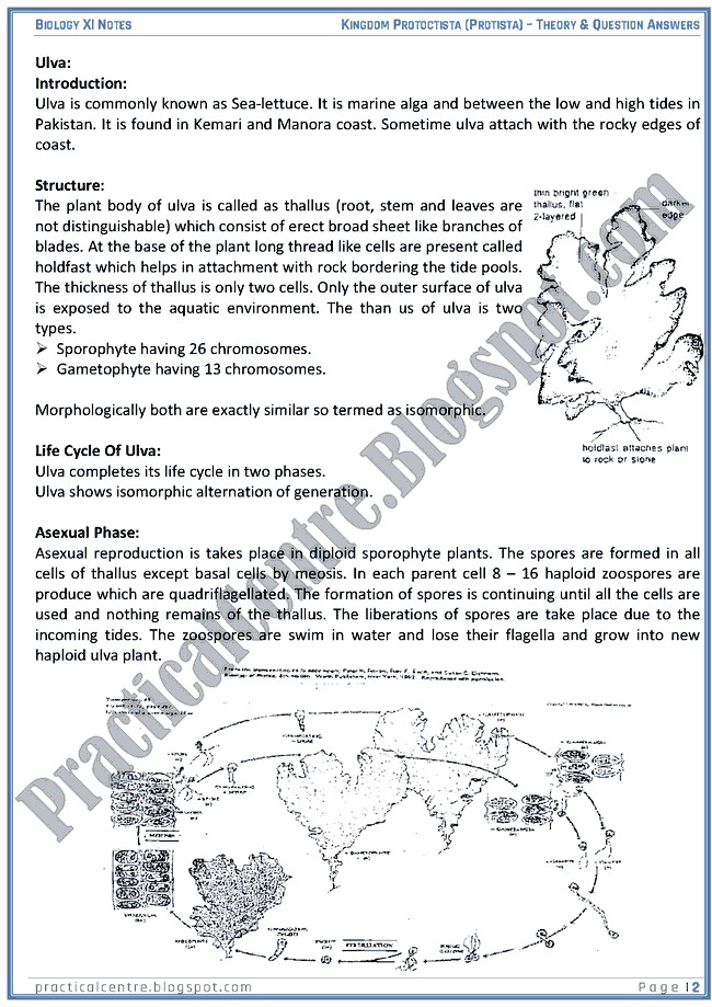 Kingdom Protista (Protoctista) - Theory And Questions Answers - Biology XI