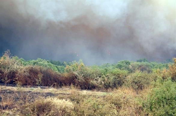 Έβρος: Μετανάστες έβαλαν φωτιά σε δασική έκταση