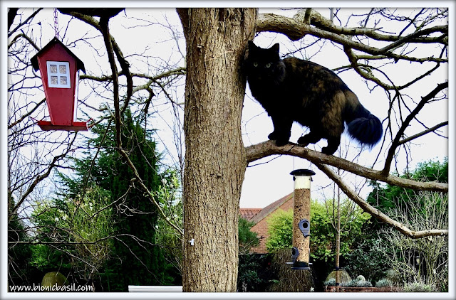 Pandora The Tree Inspector ©BionicBasil® The Pet Parade 384