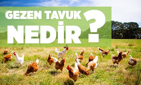Gezen Tavuk Yumurtası Nedir? Gezen Tavuk Yumurtası Nasıl Olur?