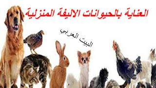 تربية الحيوانات الاليفه