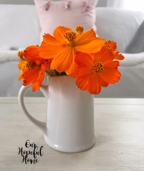 orange cosmos flowers farmhouse white porcelain pitcher