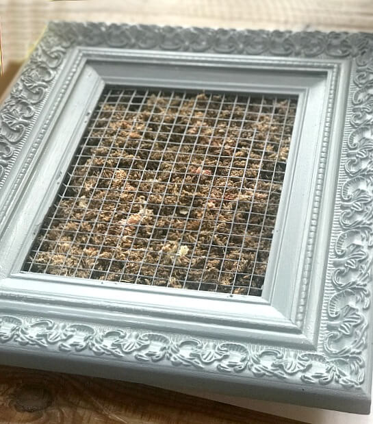 How to build a frame for succulent plantings
