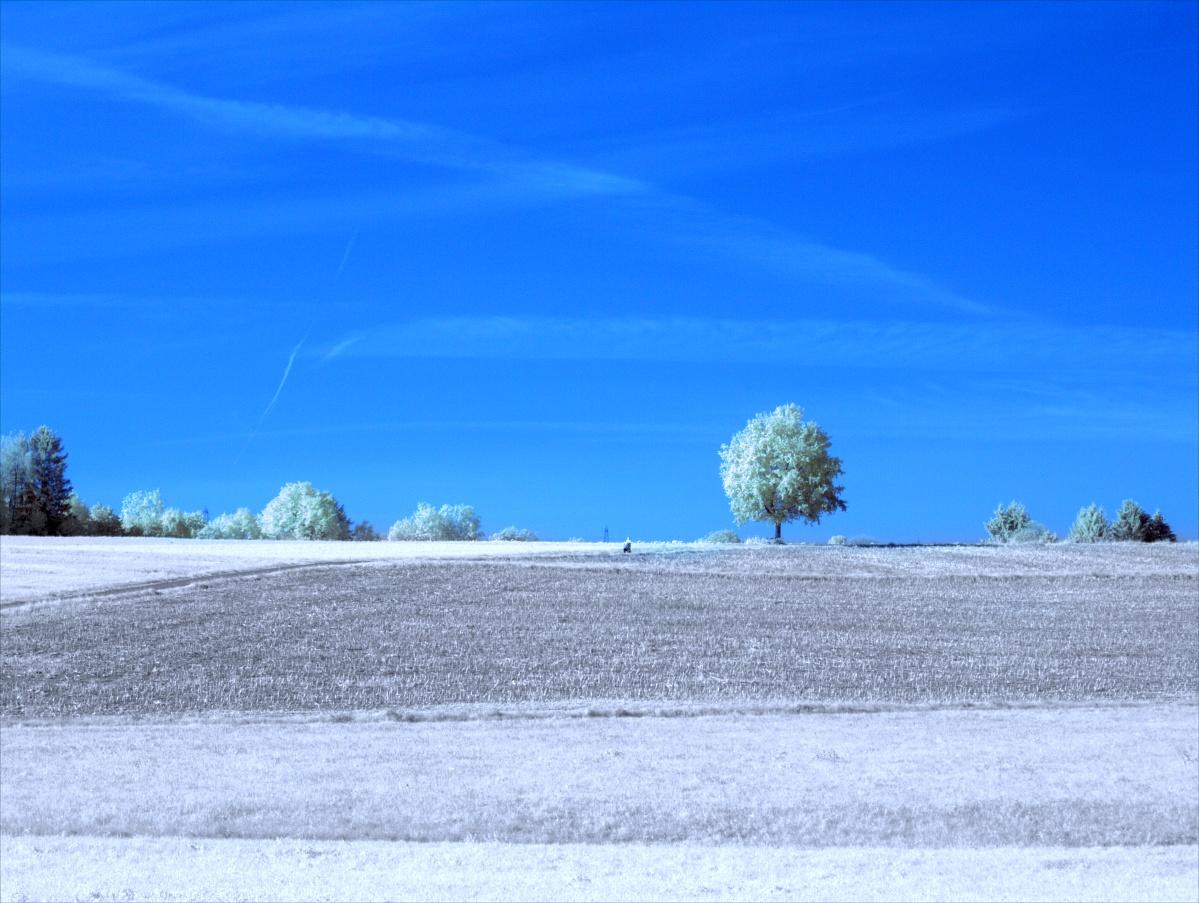 Bekannter Baum im Infrarot