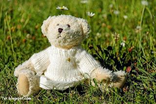 صور الدب