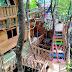 Sensasi Wisata Rumah Pohon Mangrove Masnana Wajib Dikunjungi