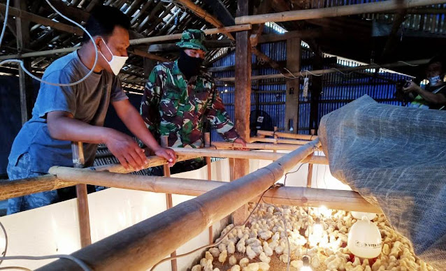 Manfaatkan Jeda TMMD Untuk  Belajar Beternak Ayam