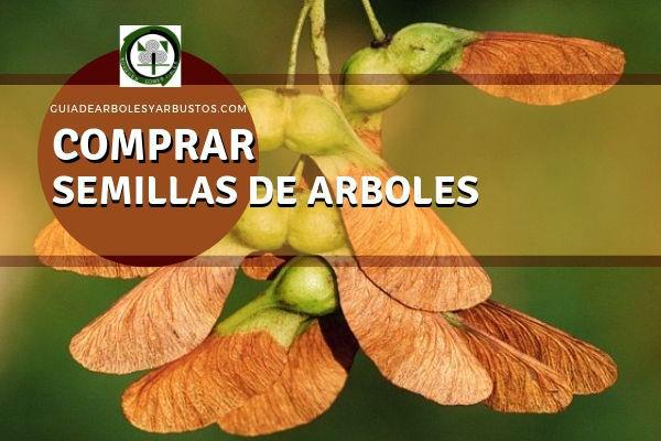 Semillas de Arboles, el sitio donde comprar online las especies de arboles y arbustos más indicados para tu proyecto