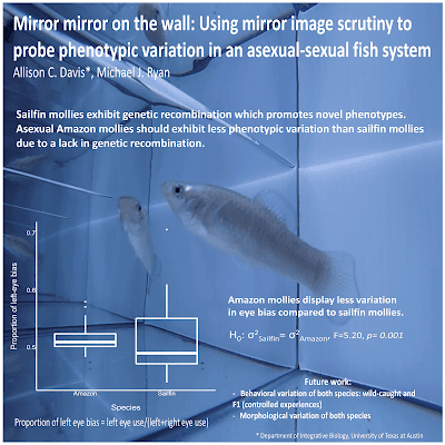 "Poster titled, ""Mirror mirror on the wall: Using mirror image scrutiny to probe phenotypic variation in an asexual-sexual fish system"""
